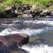 狩野川、釣れるが場所ムラ激しいよ