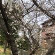 咲いた!咲いた(^ν^)桜が咲いた‼️