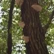 上野の森 樹木調査 6回目