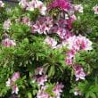 床屋さんとゴルフコンペと庭の花
