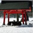 雪 の 「赤城神社」 (2の1)  ★ 2018.02.20 ★