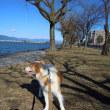 極寒の琵琶湖岸