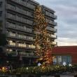 巷のマンションでもクリスマスツリーが飾られ始めました。