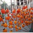 干し柿(2)