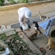 飼い猫、野良猫、野猫なんだね。奄美には野猫が多く、アマミノクロウサギなどを捕食!