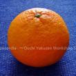 春と柑橘のほどよい関係