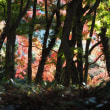 由布院温泉 梅園さんの紅葉(2) 2017