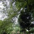 八月二十一日は、 細野豪志の誕生日・静岡県民の日です。