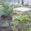gardendiary・・・五月
