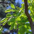 五月晴れの新緑