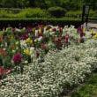 京都府立植物園で花散歩してきました。