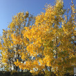 9月が、収穫の秋!
