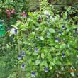 聖籠町蓮野の旧庄屋・二宮家のバラ園と日本庭園