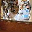 テレビ出演もしたむすめのネコのエル