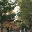 秋色の公園散歩