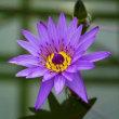 神代植物公園の大温室の花々たち その4