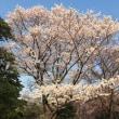 桜、桜 幸せなひと時☆