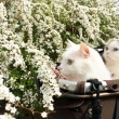 桜の前に……雪柳。