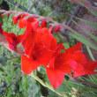 7月28日・今日の花