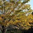 紅葉樹木オンパレード