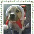 ワンコ先生のクリスマス