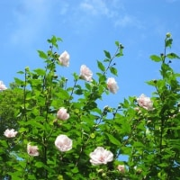 8/18(土)のPACニュース~暮らし&身近な法律・判例の情報