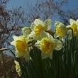 春は来ぬ、でも今ひとつ欠けている