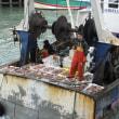 フランスの漁業団体はホタテガイの合意がないことを悔やむ