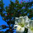 『秋の庭』 日本庭園