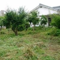 叔母の家の庭草刈り
