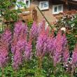 Garden Pensions