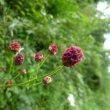 台風に耐えた『野の花たち』