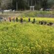 石神の菜の花畑を走る小湊鐡道「里山トロッコ列車」に乗ってきました。