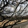 ☆ 太いくちばし、短い尾の野鳥、シメの姿、ドキドキ眺め ☆ B公園(岐阜県岐阜市)