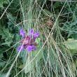美ヶ原の花々