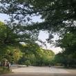 新緑の桜並木