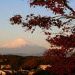 今朝の富士見散歩