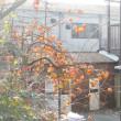 鈴生りの柿