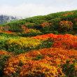 朝日岳の初雪と紅葉