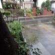 今日も一日中雨が降り続いた・・・・・呆れます・・・