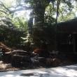 大樹の木陰で神楽画の大作を仕上げる夏の一日