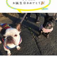 ライちゃん11歳おめでとう!!