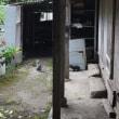 2018沖縄のネコ