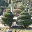 爪木崎花園 (静岡県下田市) 面白いオブジェの木がある