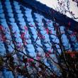 『残り雪』 善福寺