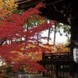 京都で紅葉狩り