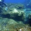サンゴの共同調査