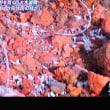 6/18 火山岩を砕いて彼らのモルタルを作る