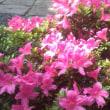 皐月・紫陽花