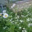 日々是好日、名もなき草花とともに・・・